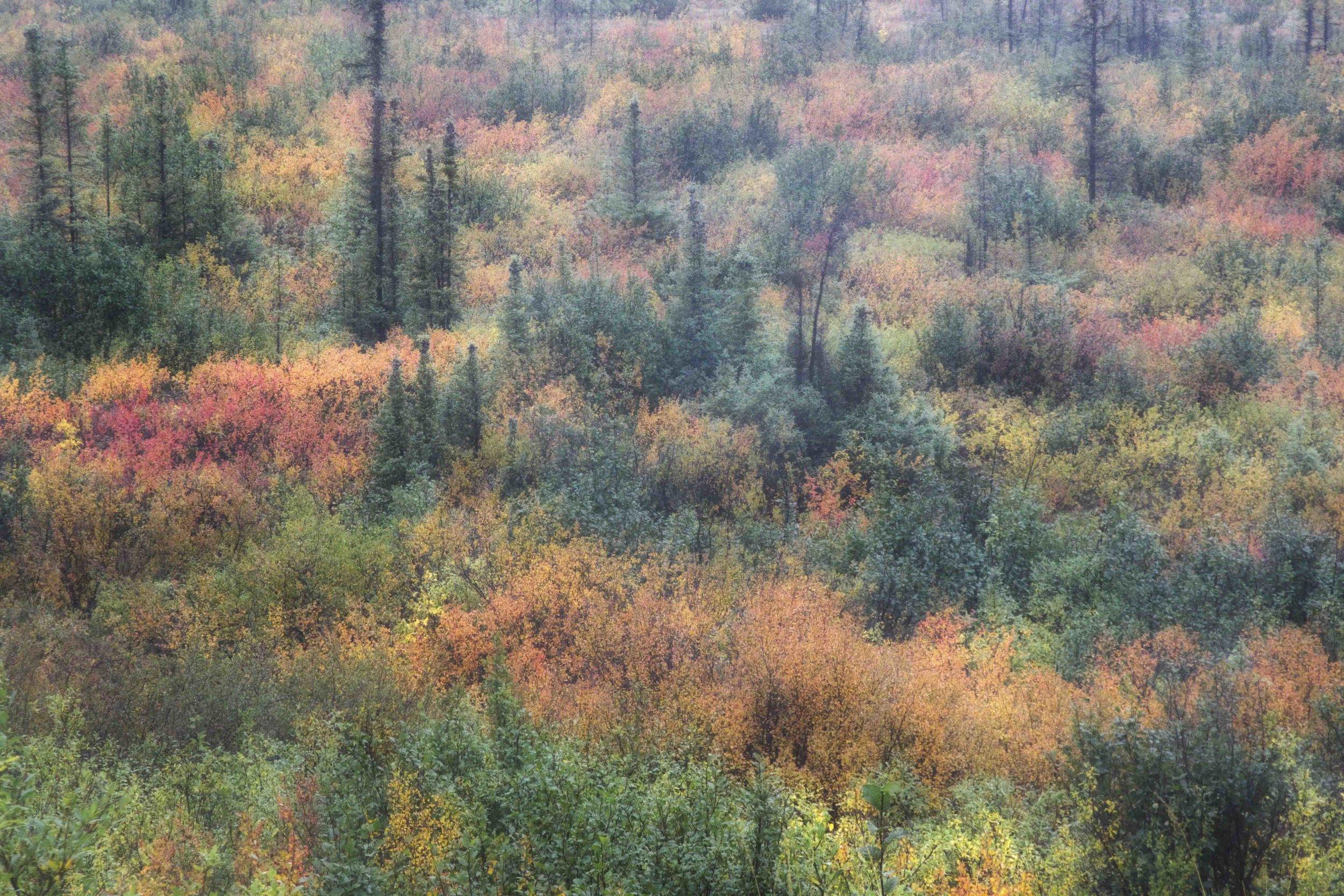 Dempster Highway, Roadtrip, Landscape, Arctic, rob gubiani, Tundra, Tombstone, Tuktoyuktuk, Inuvik, Dempster, Yukon, travel, wanderlust, fall,