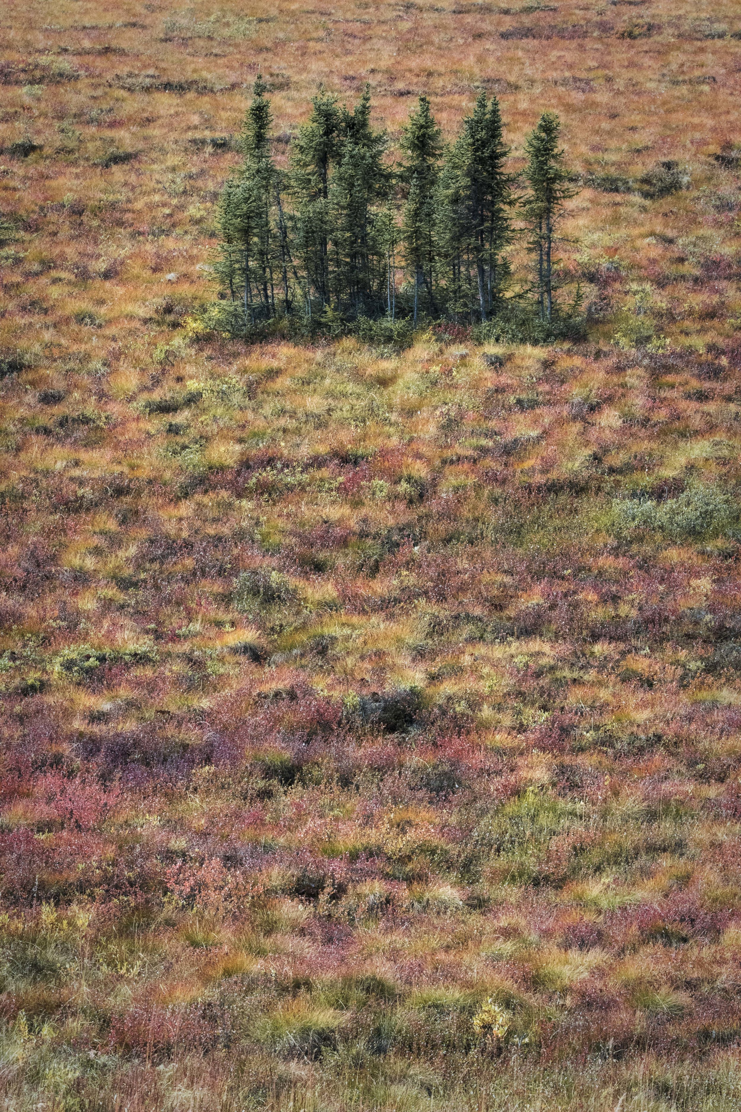 Dempster Highway, Roadtrip, Landscape, Arctic, rob gubiani, Tundra, Tombstone, Tuktoyuktuk, Inuvik, Dempster, Yukon, travel, wanderlust, boreal, forest, boreal forest, fall, autumn,