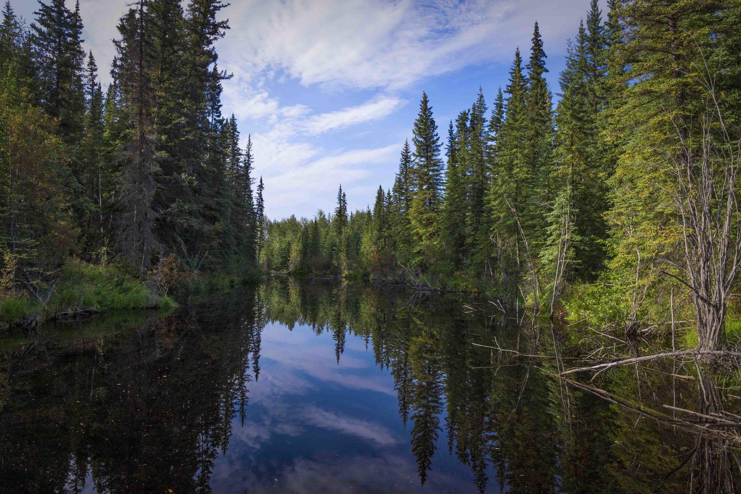 Dempster Highway, Roadtrip, Landscape, Arctic, rob gubiani, Tundra, Tombstone, Tuktoyuktuk, Inuvik, Dempster, Yukon, travel, wanderlust, boreal, forest, boreal forest, mirror,