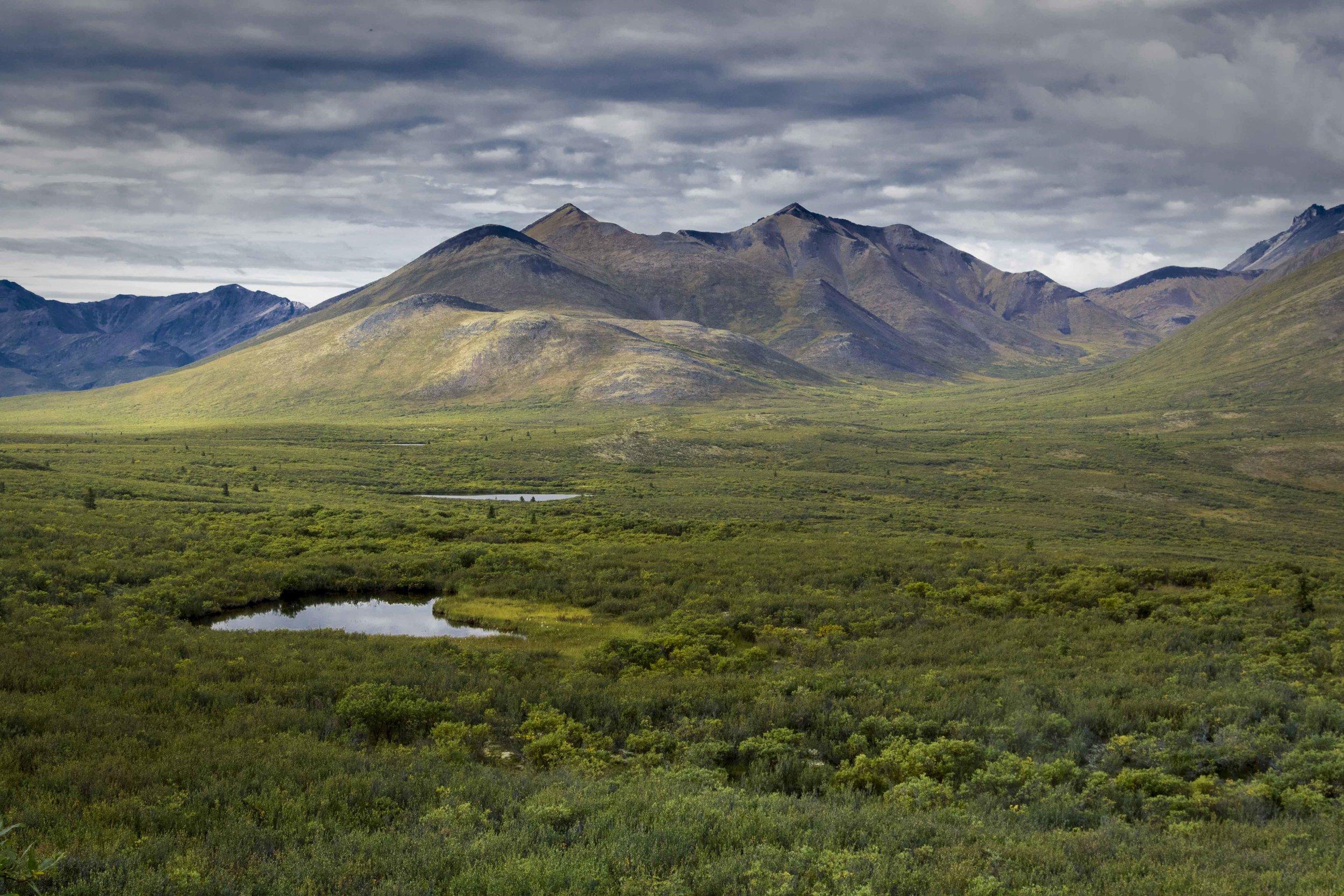 Dempster Highway, Roadtrip, Landscape, Arctic, rob gubiani, Tundra, Tombstone, Tuktoyuktuk, Inuvik, Dempster, Yukon, travel, wanderlust, boreal, forest, boreal forest, fall, autumn, lake,