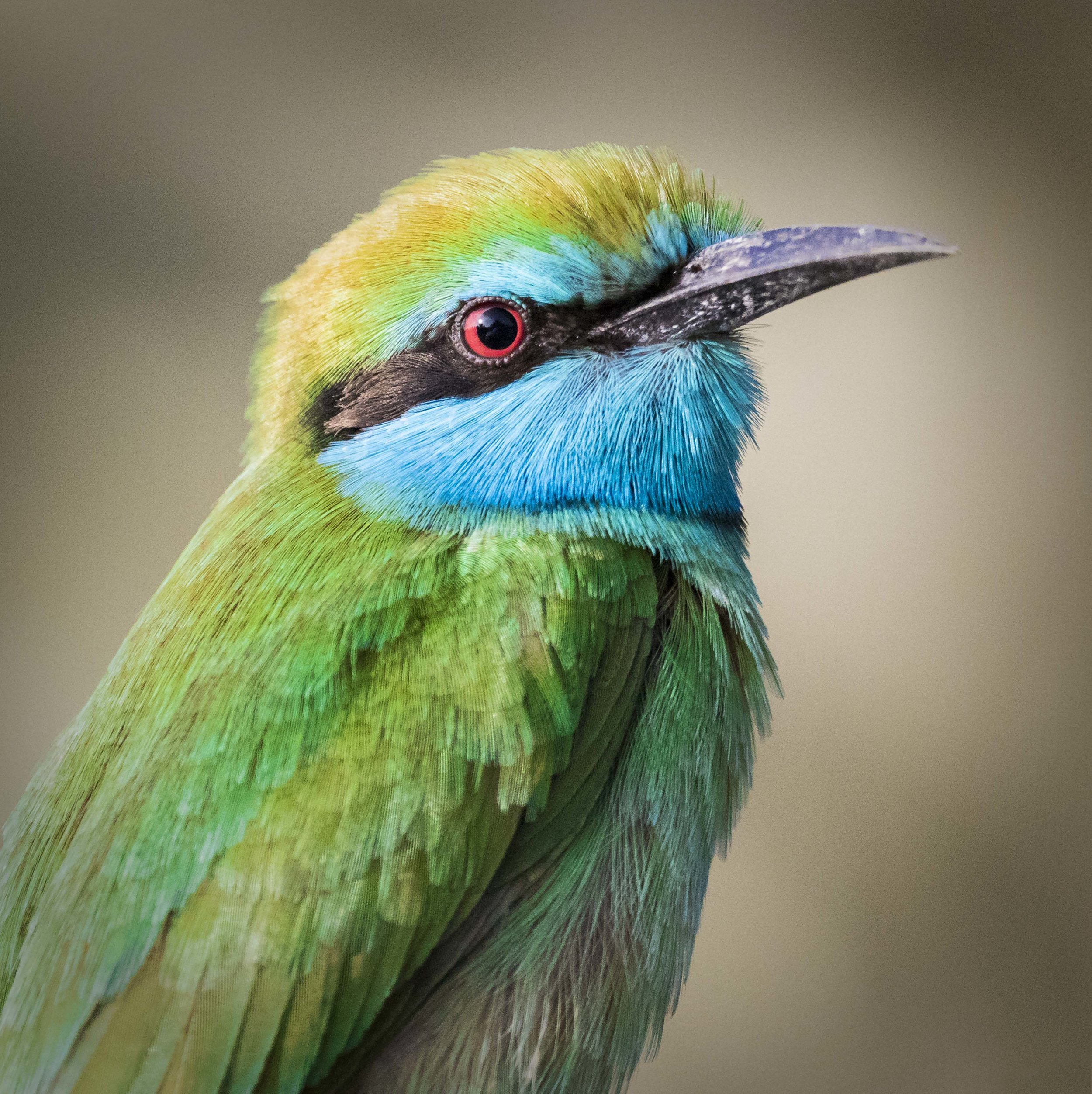 Animal Portrait 9.jpg