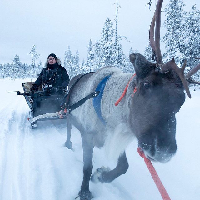 Kyydityksen kuvauspaikalle hoitaa Humu-Pekka 🦄 #work #reindeer #humupekka #lapland #freeflymovi #movipro #redhelium #freeflyalta #arcticcircle #visitlapland 📸@nopsatuomas