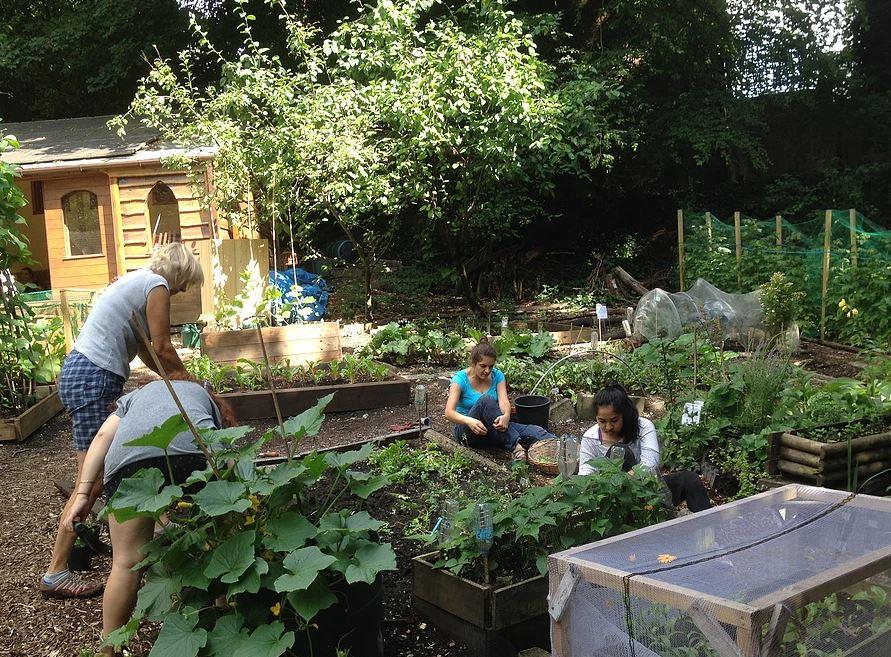 Veg patch & herb garden