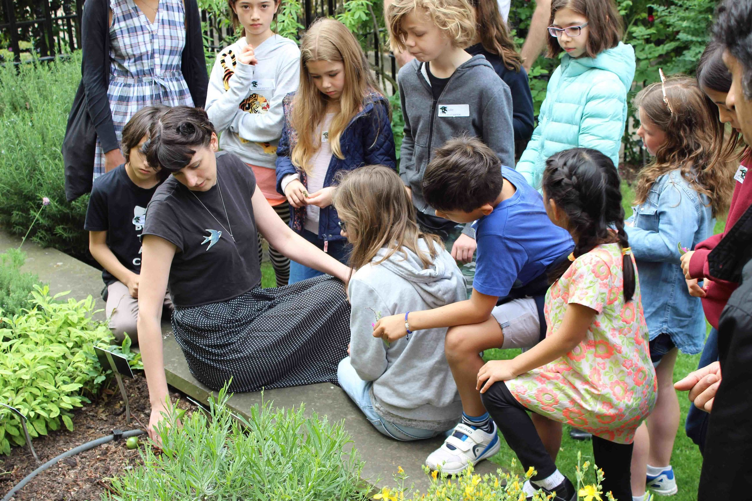 Gathering herbs in the medical garden of the Royal College of Physicians