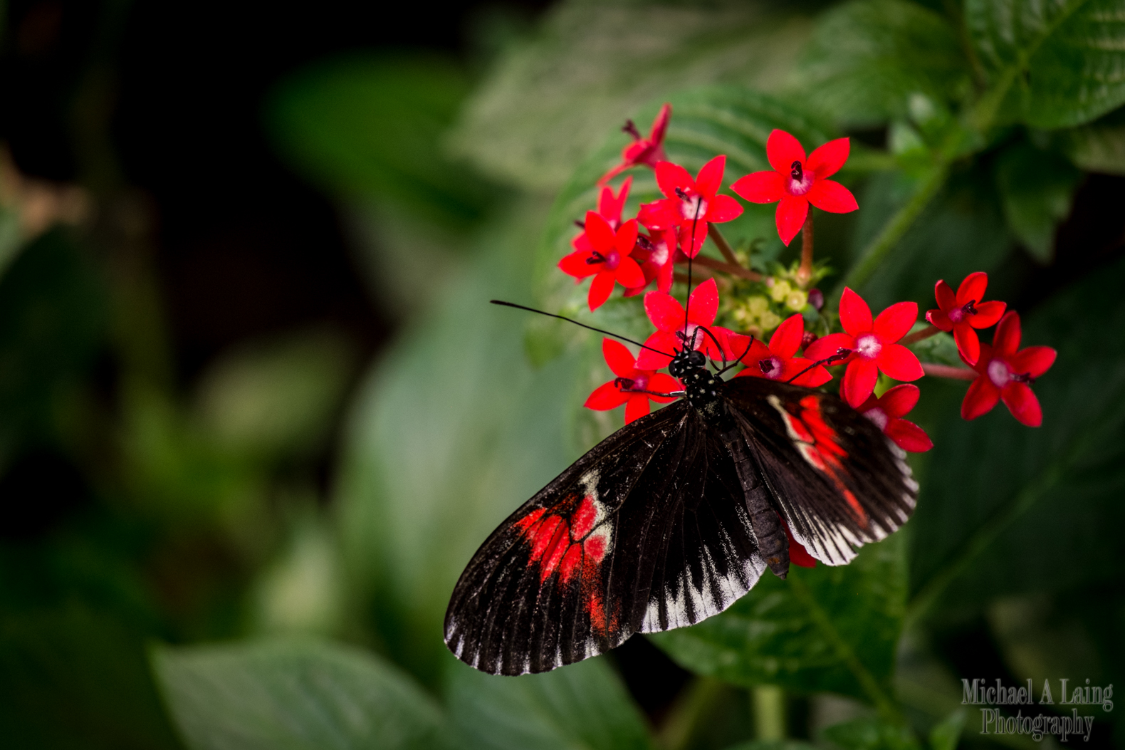 Taken at the butterfly house at London zoo. Whilst the Fuji X-E1 is a great little camera, it probably wasn't the best camera for taking to a zoo, particularly with its rather slow autofocus.