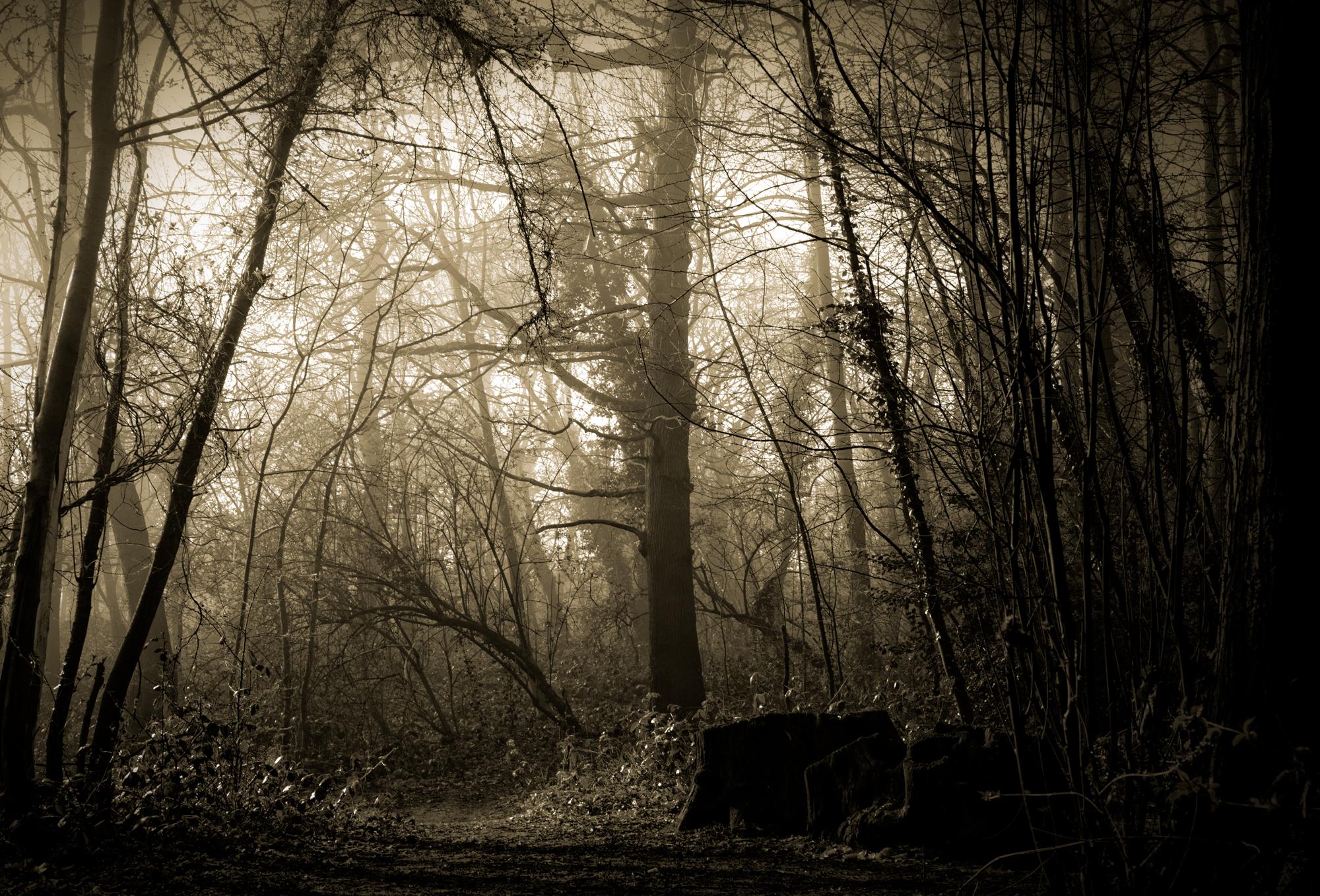 Trees c (1 of 1).jpg