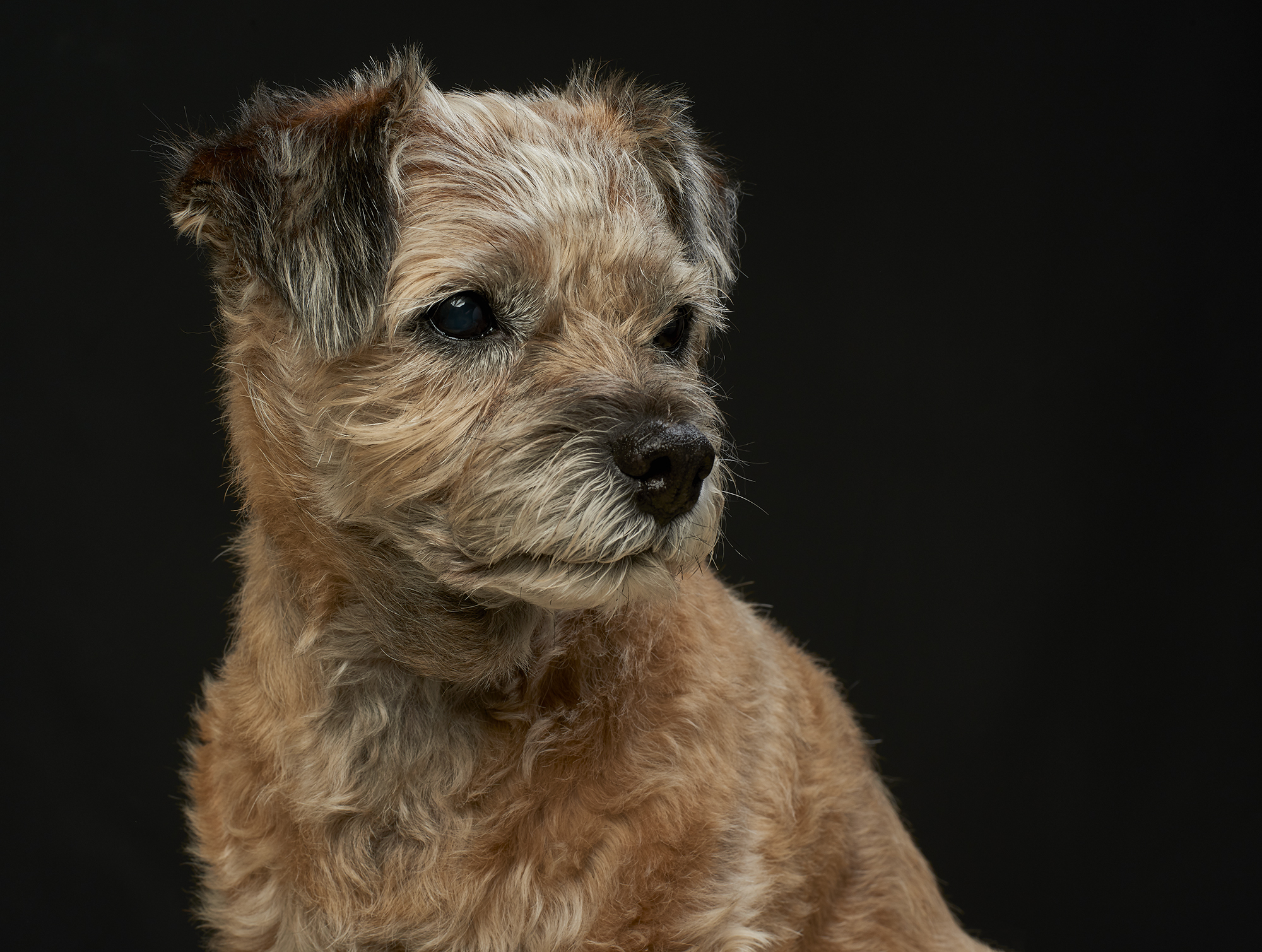 London & Essex Professional Photography Group 2019 Print Competition: Merit - Pet Portrait
