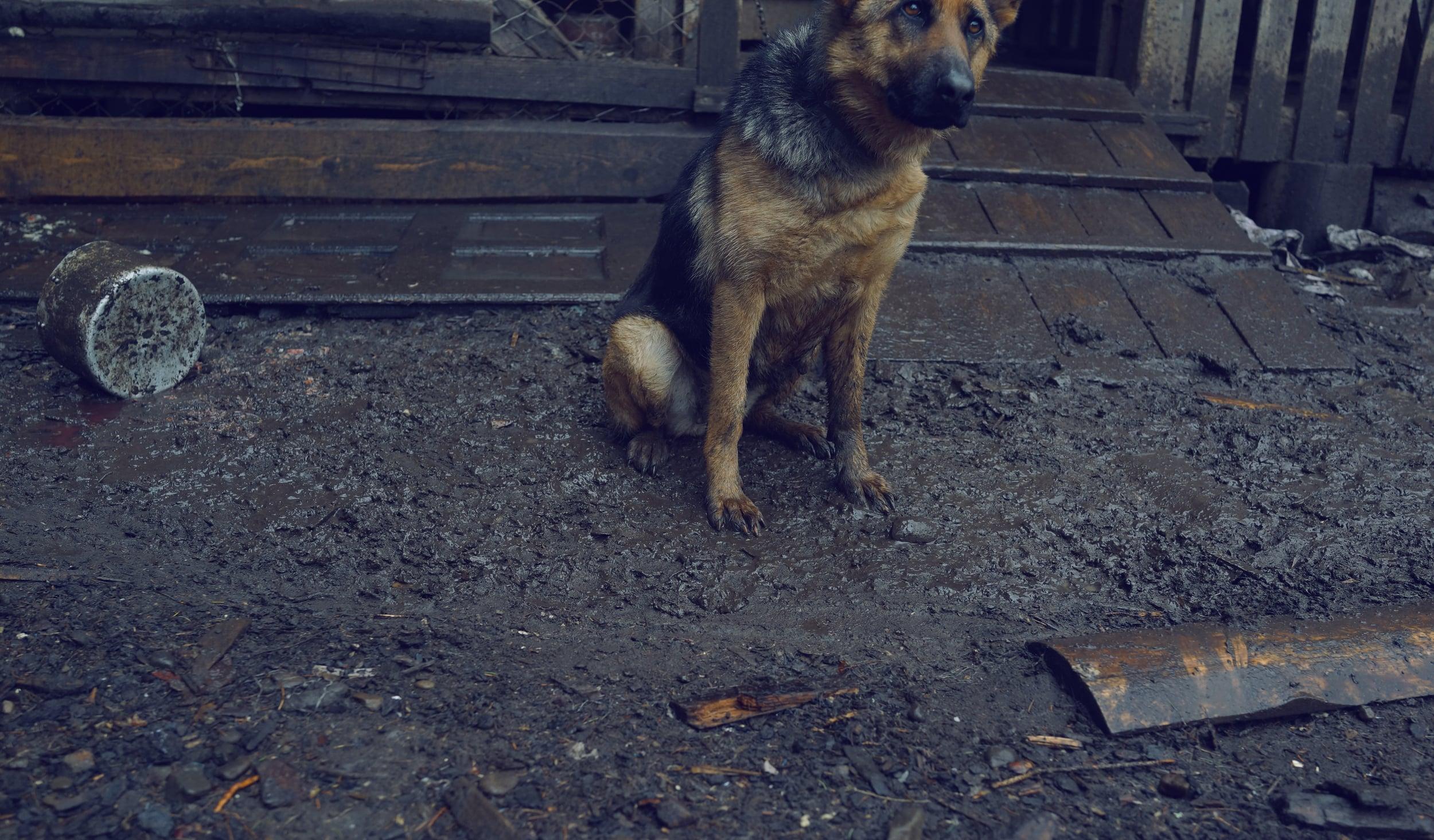 Mountain guard dog _ DSC03244.jpg