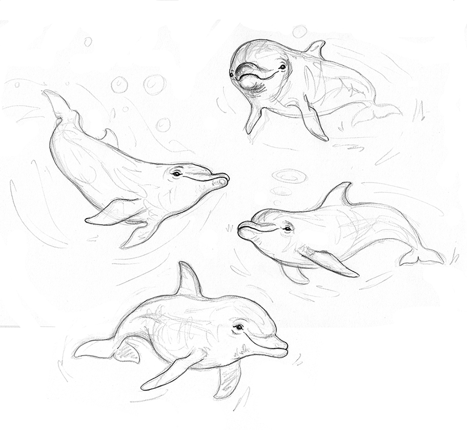 bottlenose dolphin sketches 3 small.jpg