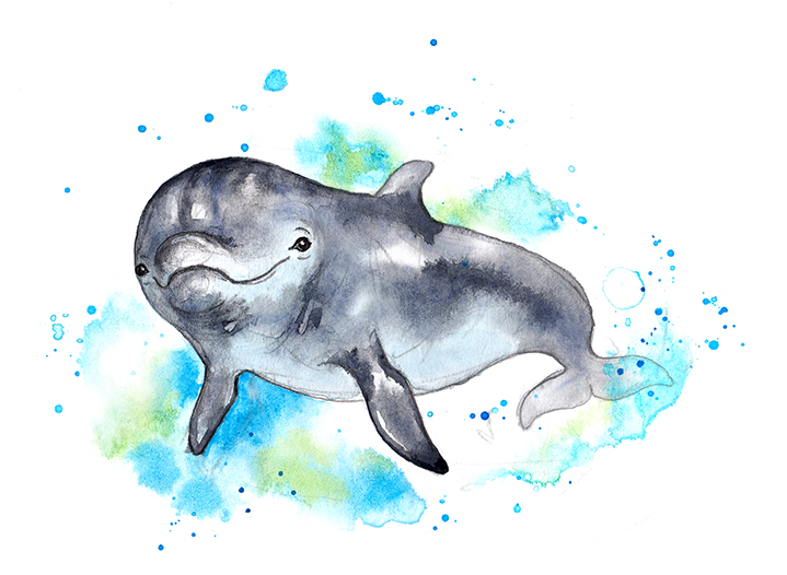 dolphin 1 colour ed small.jpg