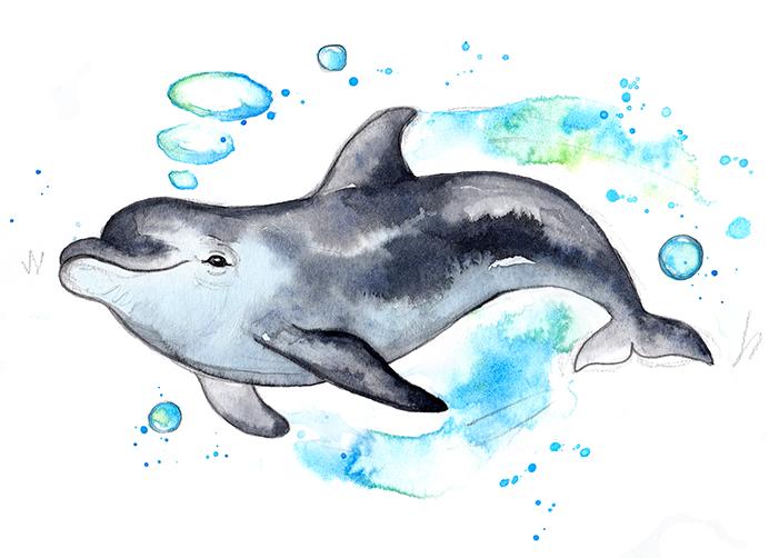 Dolphin 2 colour edit small.jpg