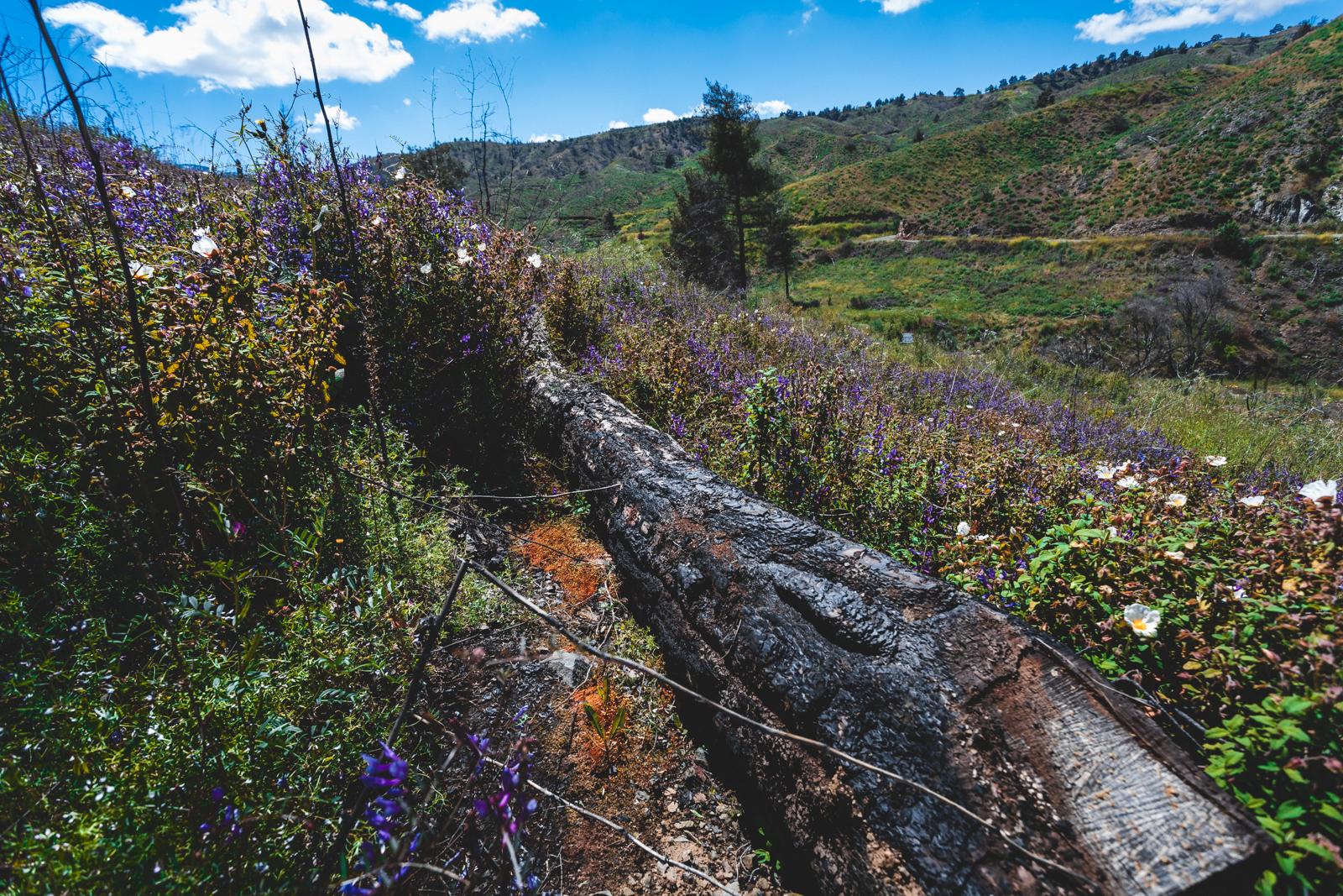 Cyprus April 19-9.jpg