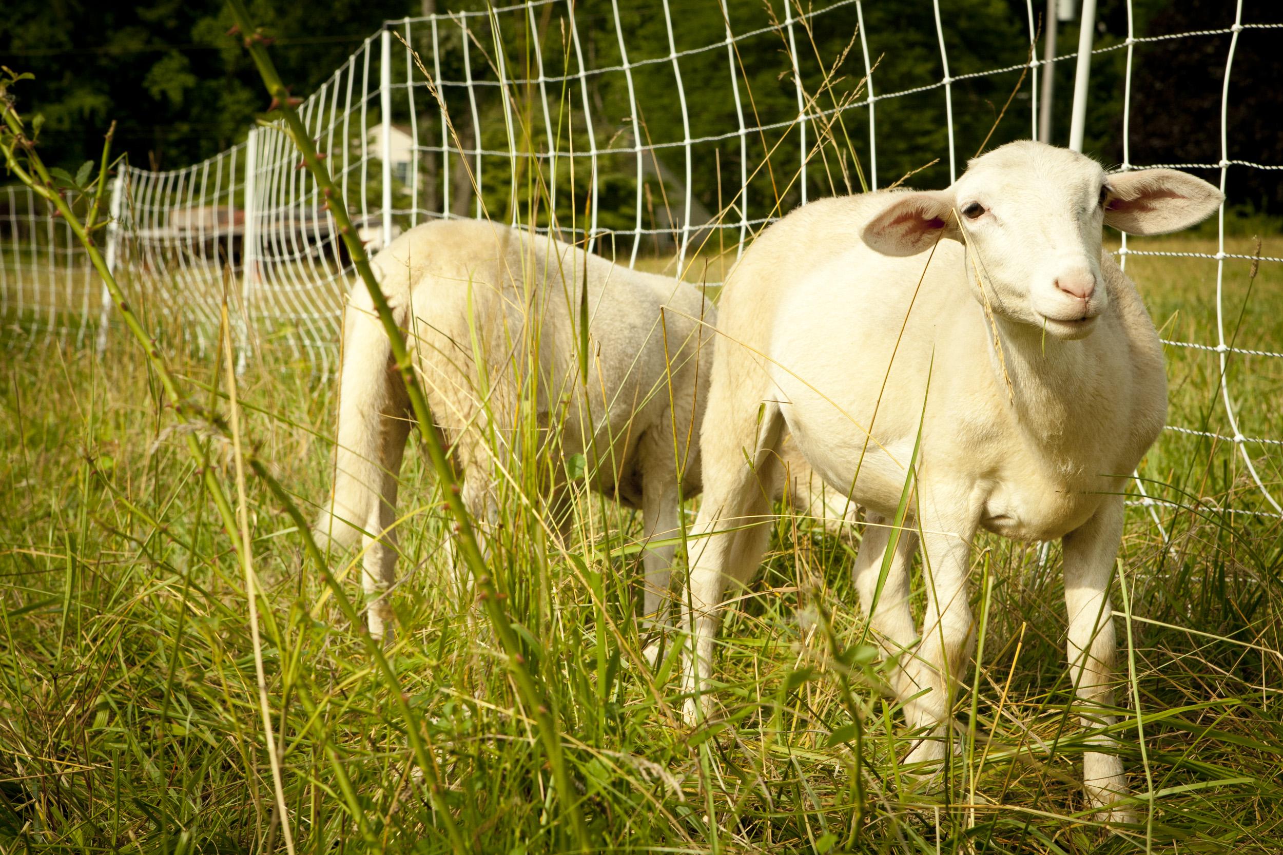 140710_wild_fox_farm_0197.jpg