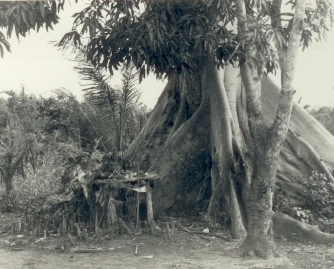 Fetish tree in shamanic ritual
