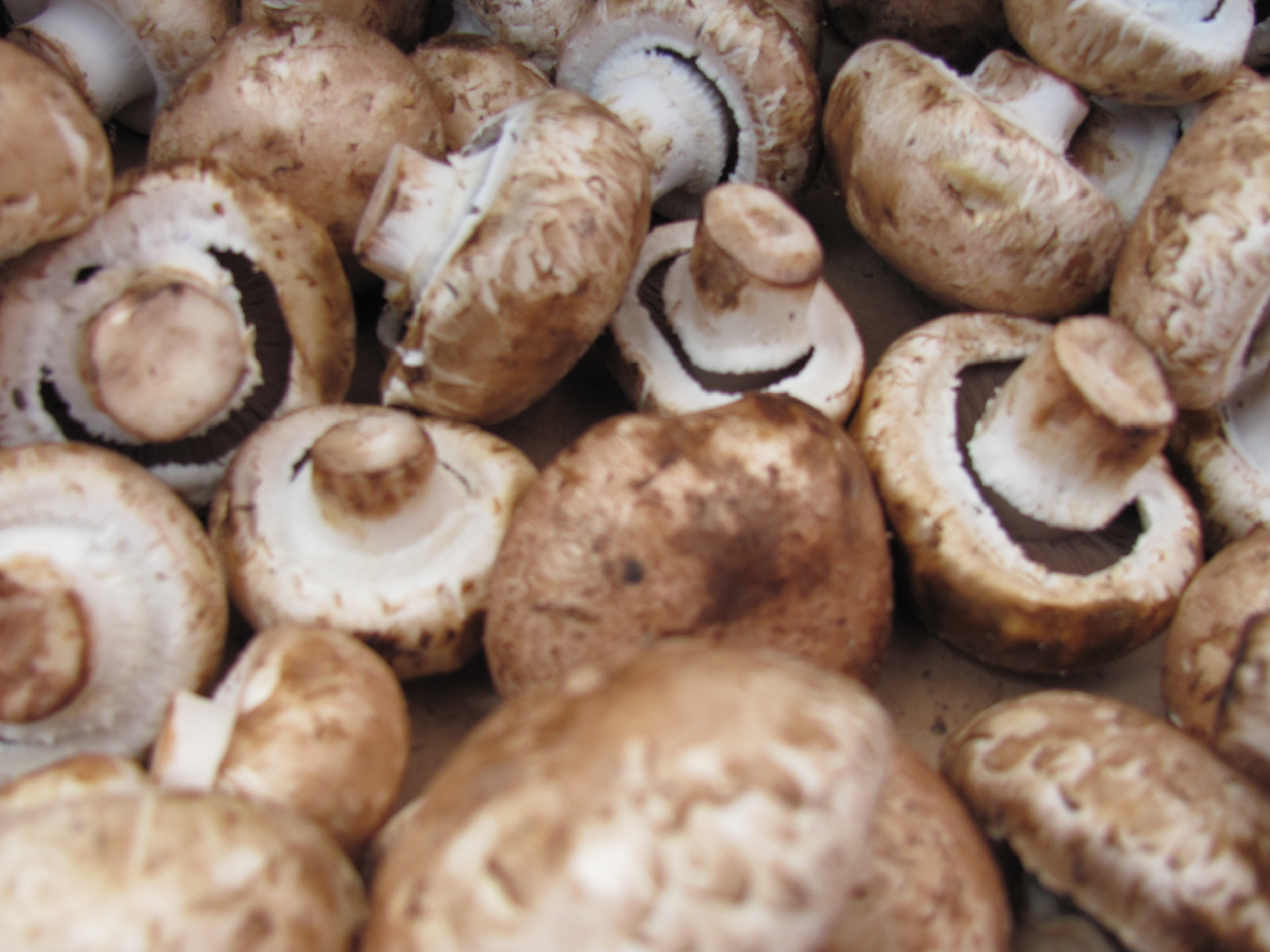 Saratoga Farmers Market mushrooms