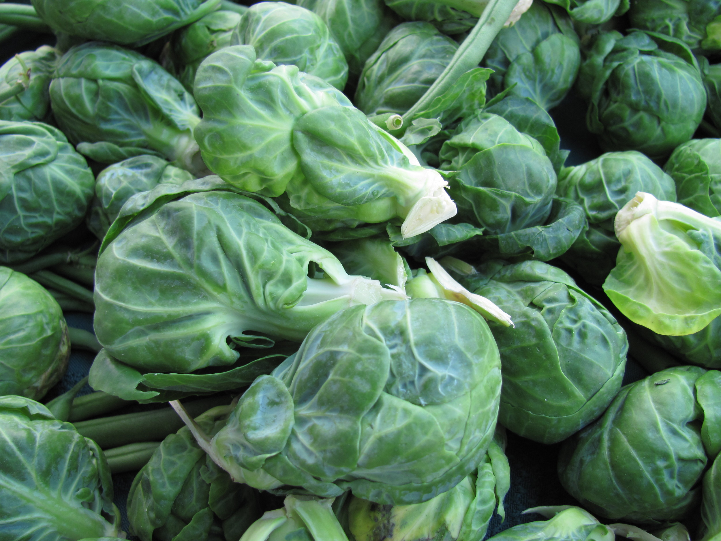 Saratoga Farmers Market brussels sprouts