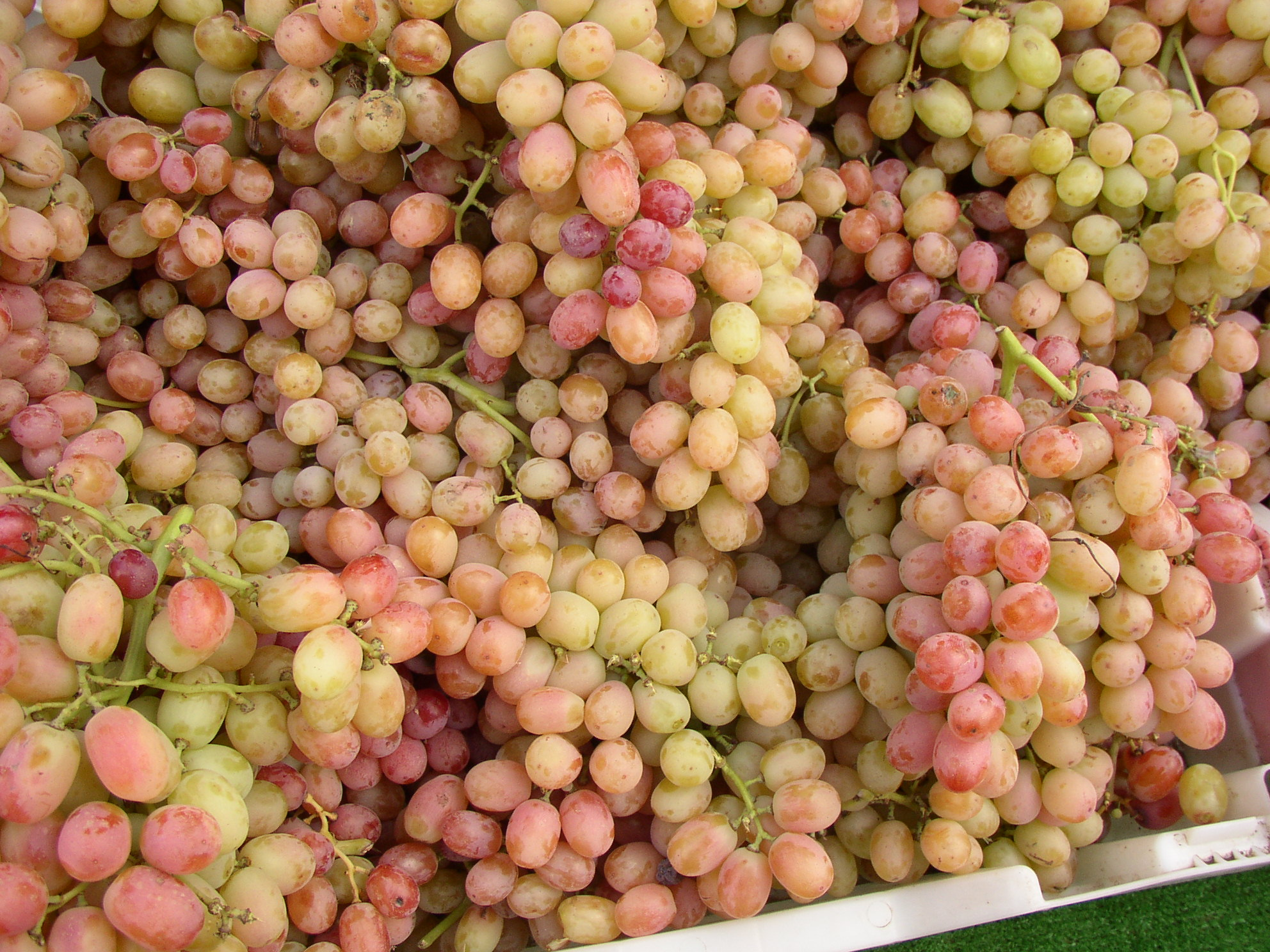 grapes 3.jpg