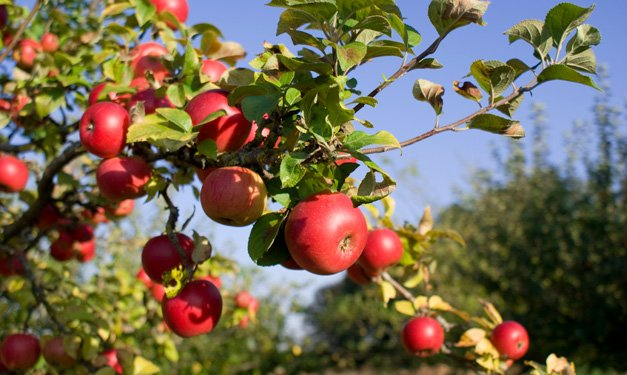 Best-Cider-Mills-U-Pick-Orchards-and-Family-Farm-Activities-in-Southeast-Michigan.jpg