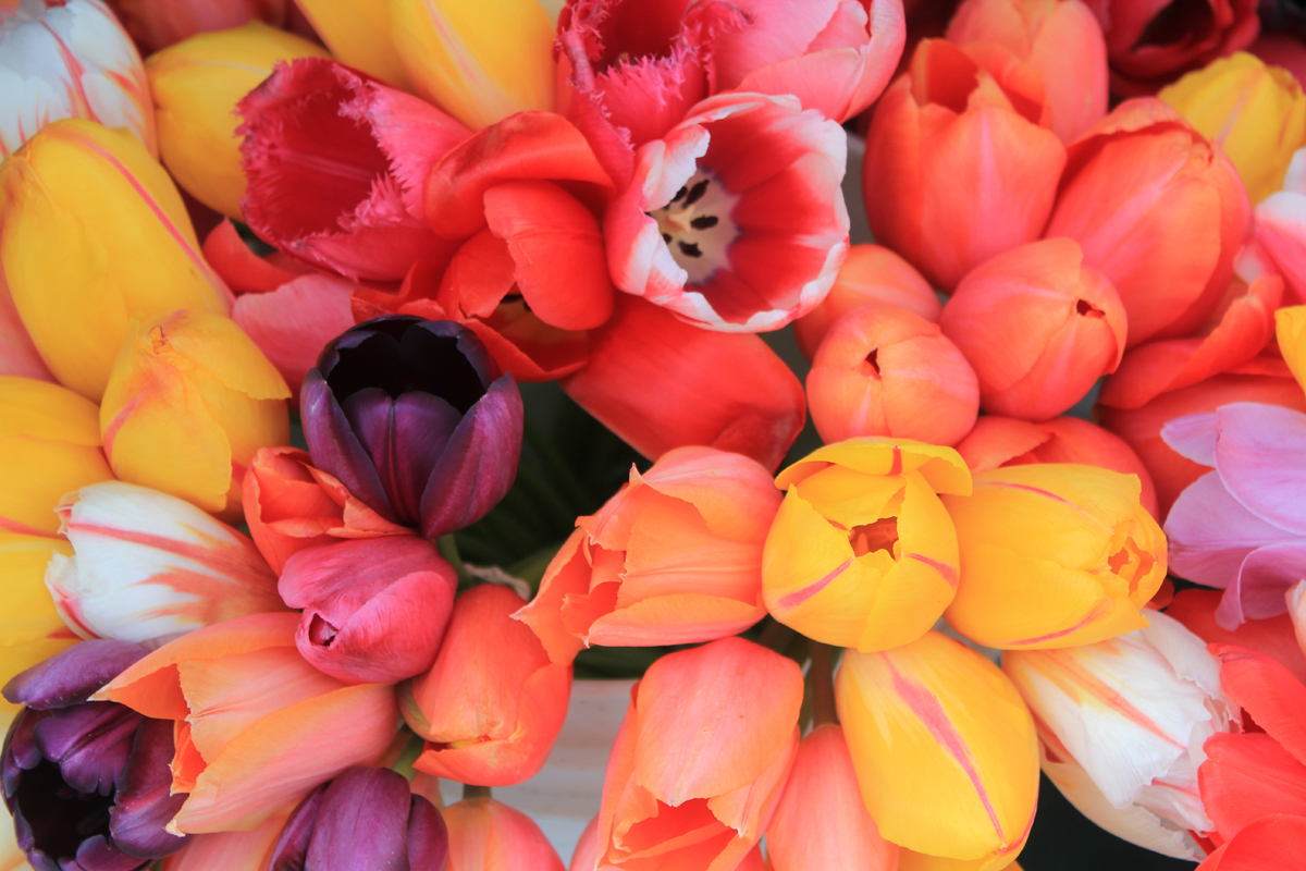 FarmersMarketTulips2011.jpg