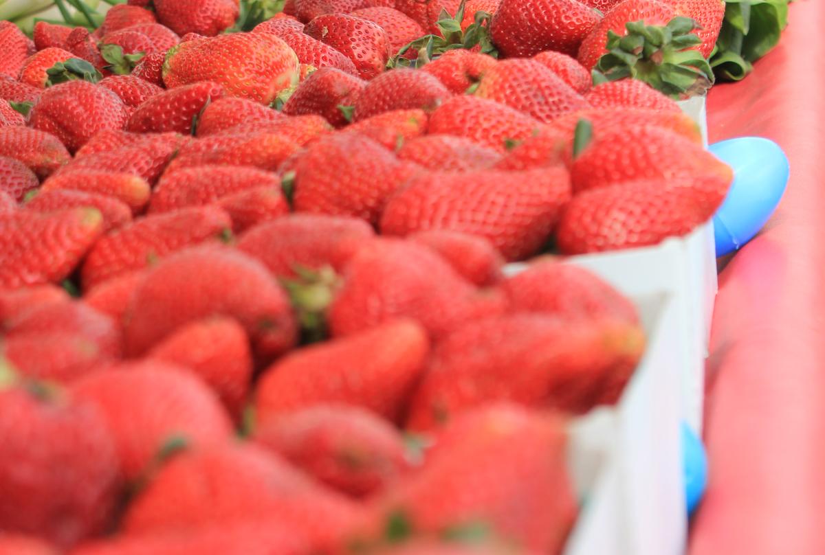 FarmersMarketEasterEggHunt2011.jpg