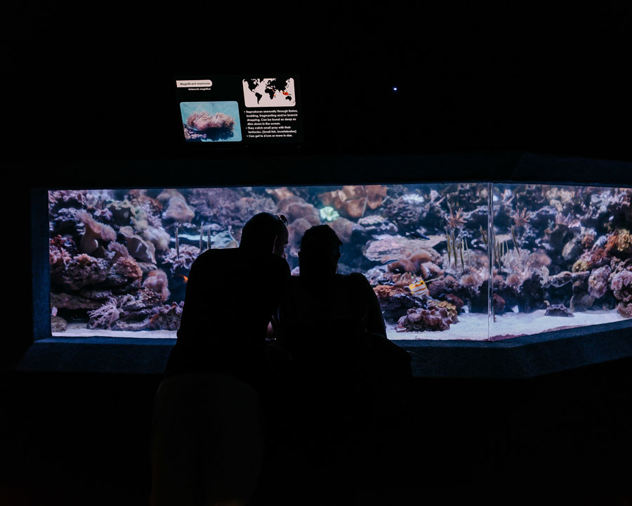 TwoOceansAquarium(12)-copy.jpg