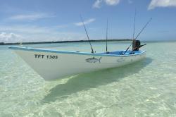 fish-tobago-tours.jpg