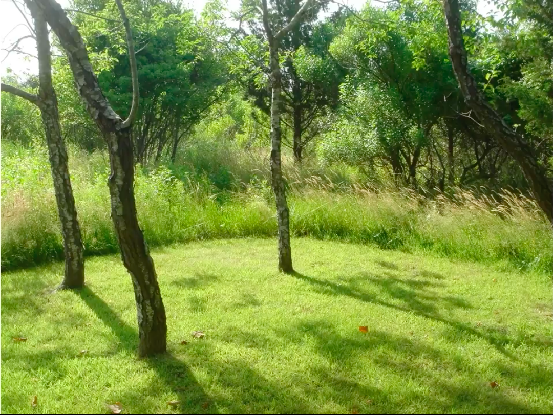 Mowed feature area.png