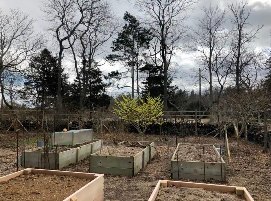 cold frame for winter lettuce + Raised beds.png