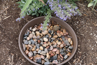 A shallow dish with rocks and water provides a safe place for bees and butterflies to land take a drink