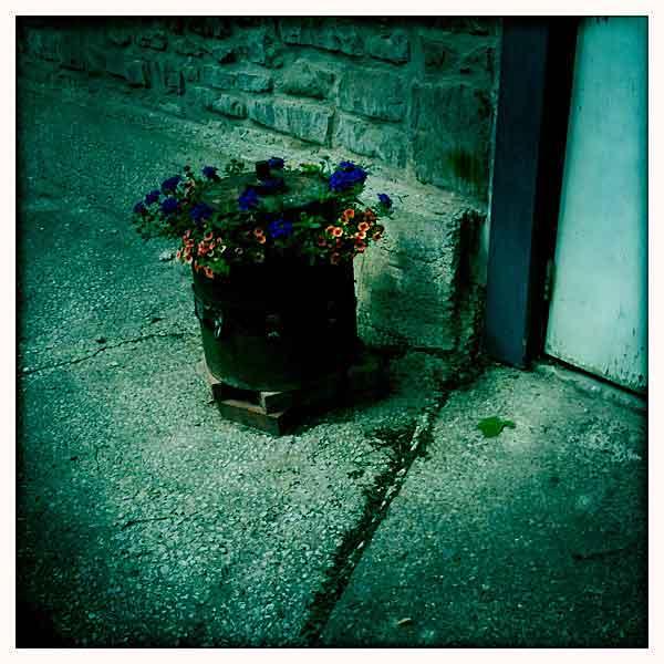 studio-flowers