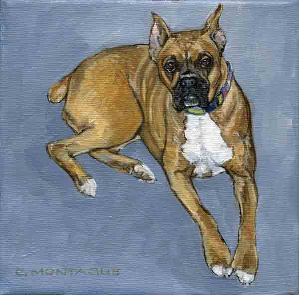 """6"""" x 6"""" Boxer dog portrait. Oil painting on canvas. Private collection."""