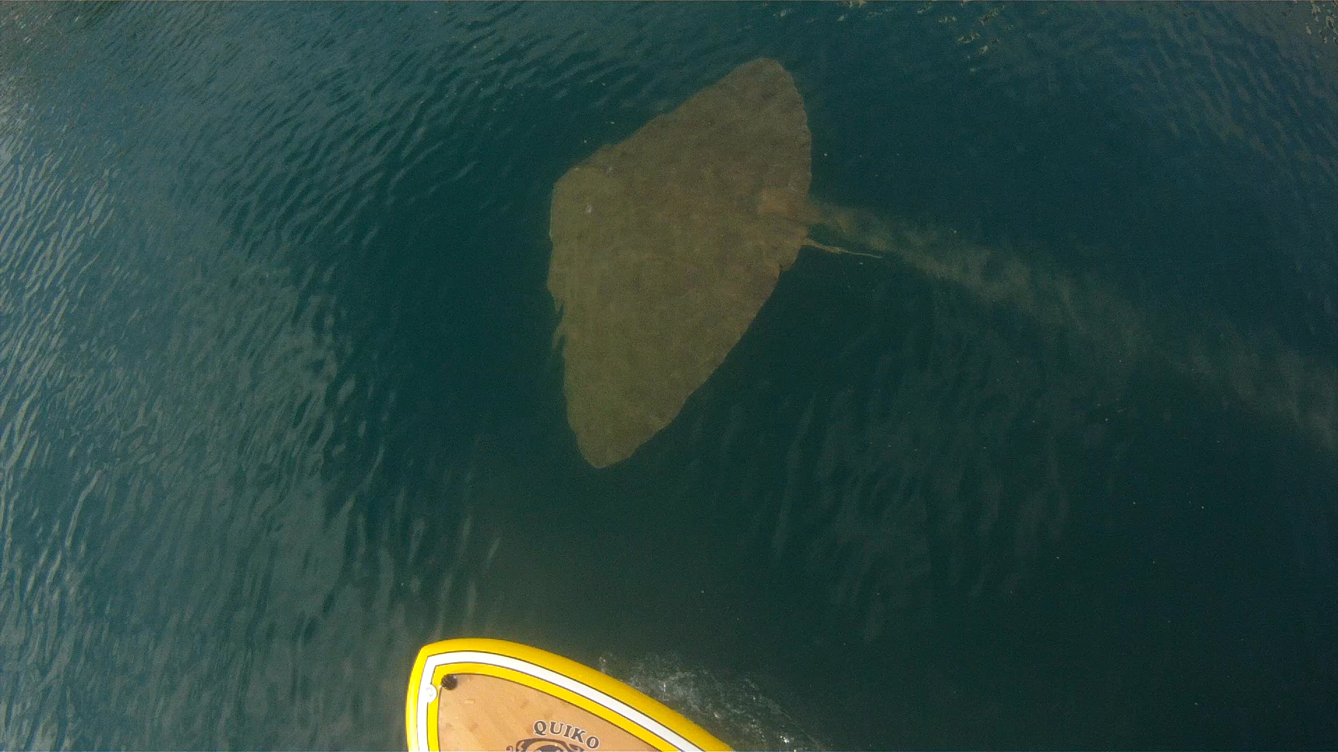 paddlling with manta rey