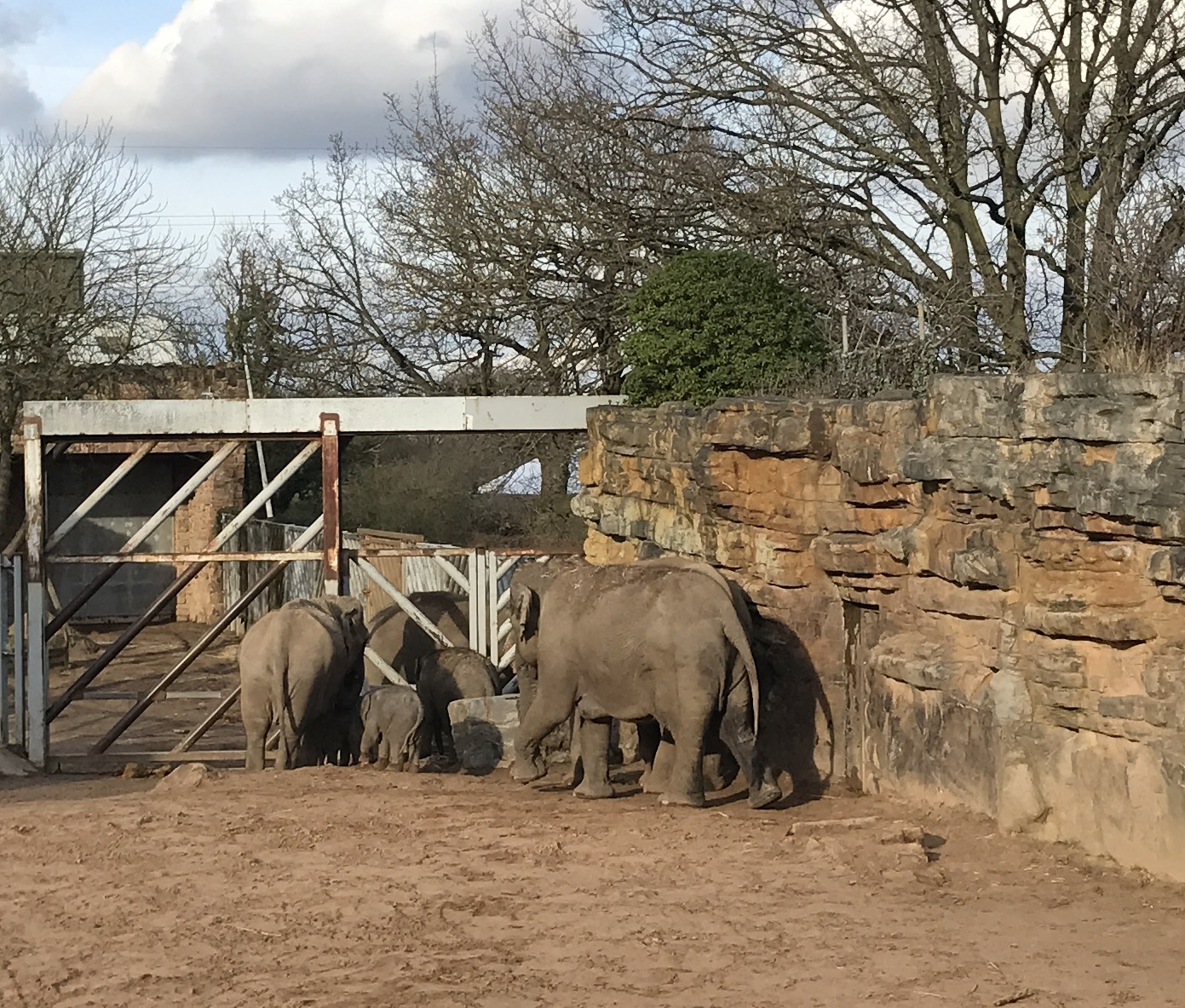 To see elephants in various sizes...