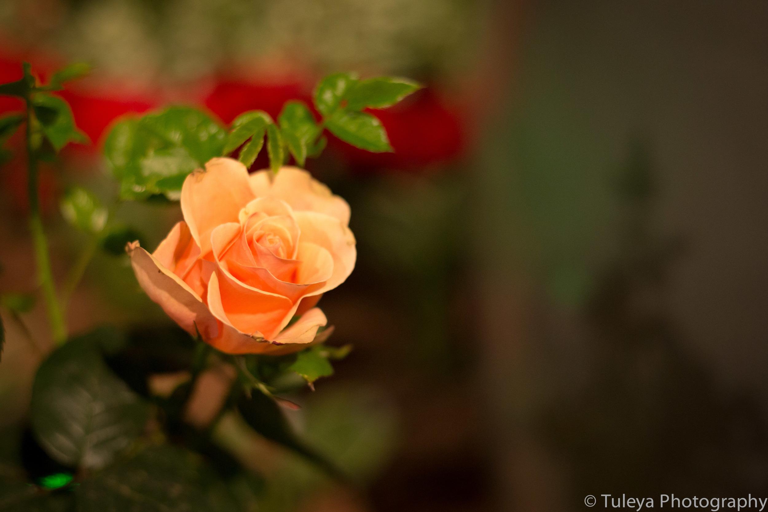Flower-2019.jpg