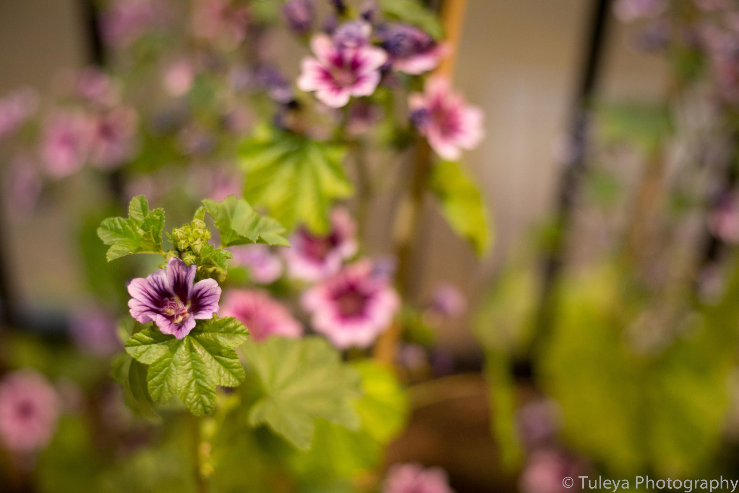 Flower-2061.jpg