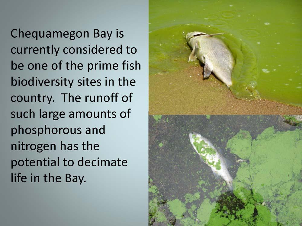 Badgerwood+and+Lake+Superior+v1_Page_39.jpg