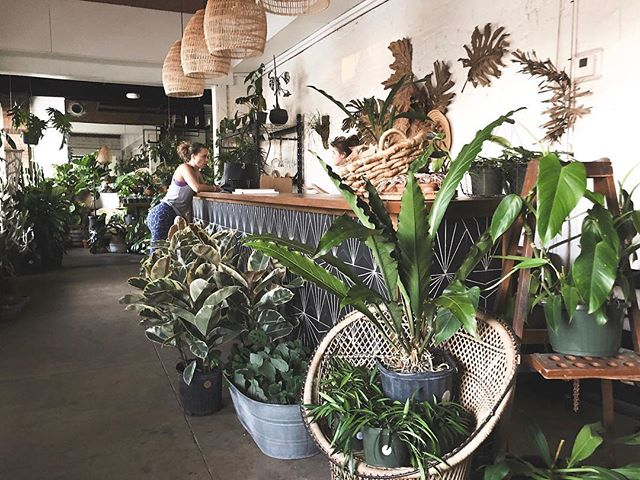 GREEN THUMBS 🌱🌵 We love our plants! The Tampa Bay Area has so many great spots if you're on the hunt for unique plants and flowers, fiddle leaf figs, or if you are wanting to add more little friends to your succulent and cacti collection. 🙋🏾♀️ Whether checking out some of our cool plant shops or shopping at one of our many neighborhood markets, you will find plants everywhere! ⠀⠀⠀⠀⠀⠀⠀⠀⠀ — @fancyfreenursery is located in Tampa Heights, in a short walking distance from the coffee shop I posted earlier this week. Before or after grabbing a cup of coffee at @foundationcoffeeco, it's a great place to be surrounded by beautiful greenery and helpful people who have a passion for all things plants. ⠀⠀⠀⠀⠀⠀⠀⠀ My other favorite places to grab plants in the area are @thrivegardenandwater, the USF Botanical Garden, and our markets and plant pop ups! -xx, @helloluci #localxTampaFL #outwithlocals