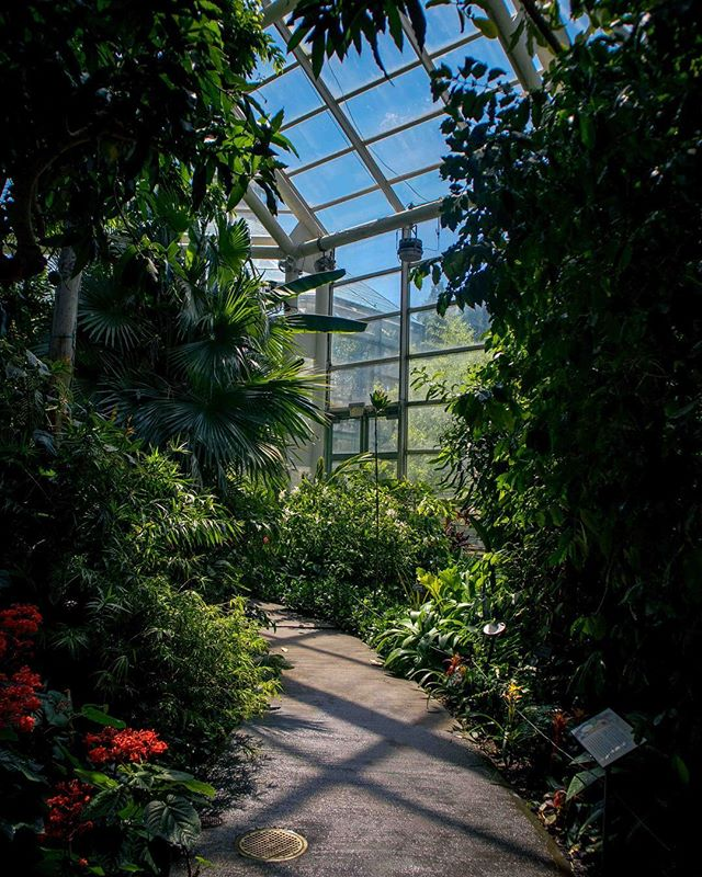 """Brooklyn Botanic Garden: Officially opened in 1911 and has literally been growing ever since. Offering some of the very first children's garden programs, as well as public Japanese gardens in the US (1915). Here we have a couple of the Conservatories - where you'll find a few different climates to wander around. In 1941, """"Kansan"""" cherry trees were planted to establish Cherry Esplanade - til this day a serious crowd favorite. Best time to go is anytime of the year, though @brooklynbotanic is very good about letting you know about what is in season. 🌸🌻🌺🌼🌷 #localxbrooklyn #outwithlocals"""