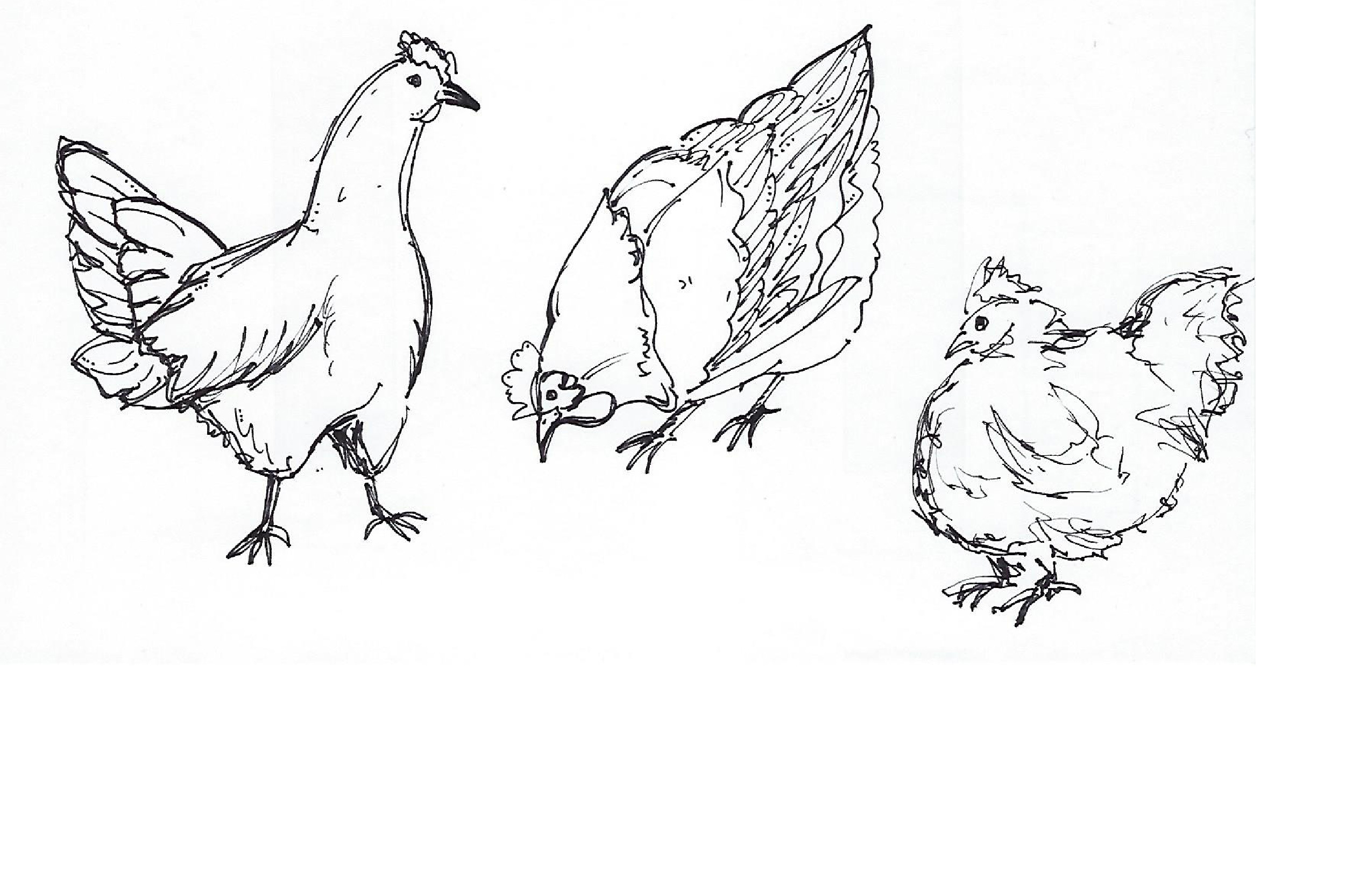 chickensketch-01.jpg