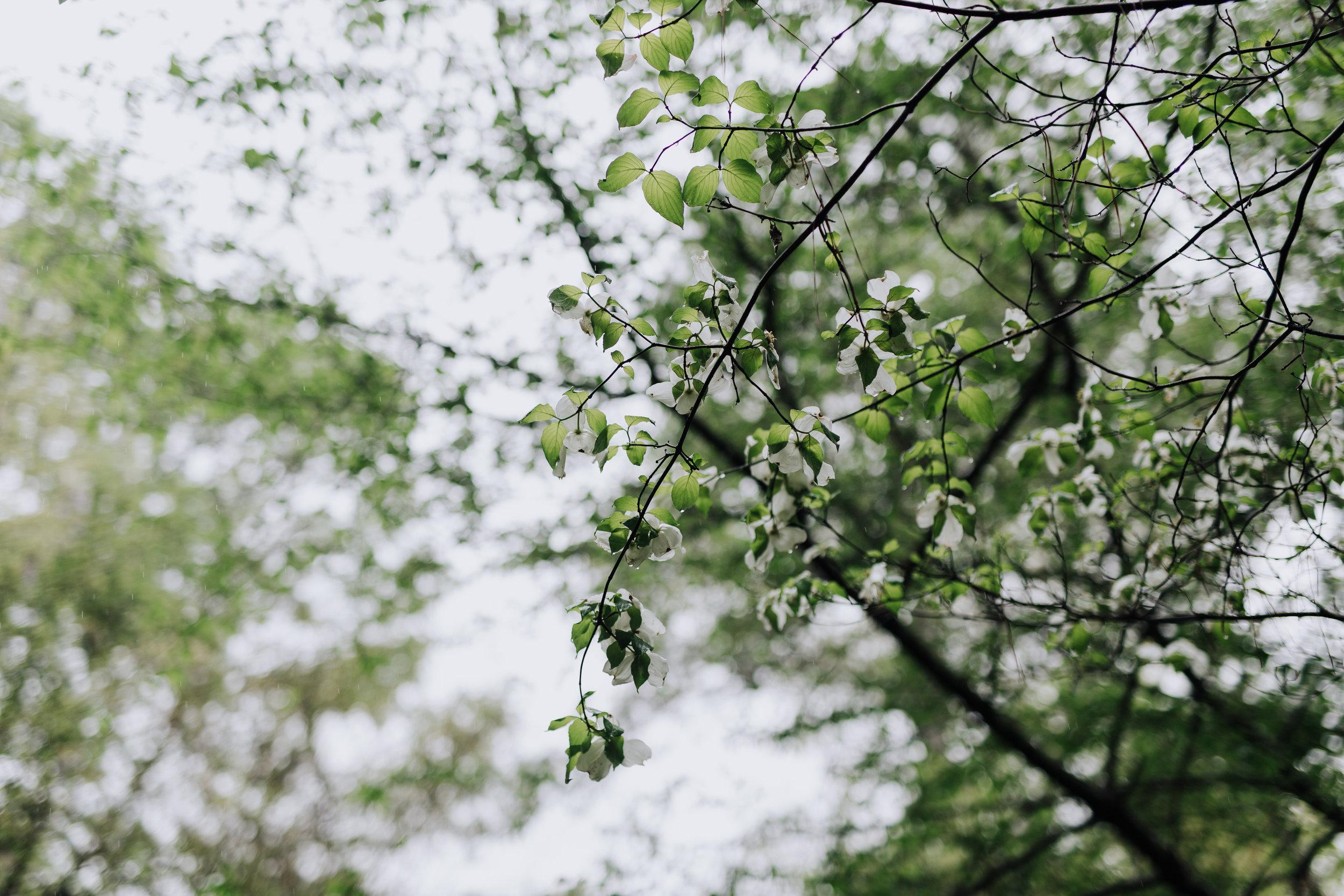spring 2019-1410.jpg