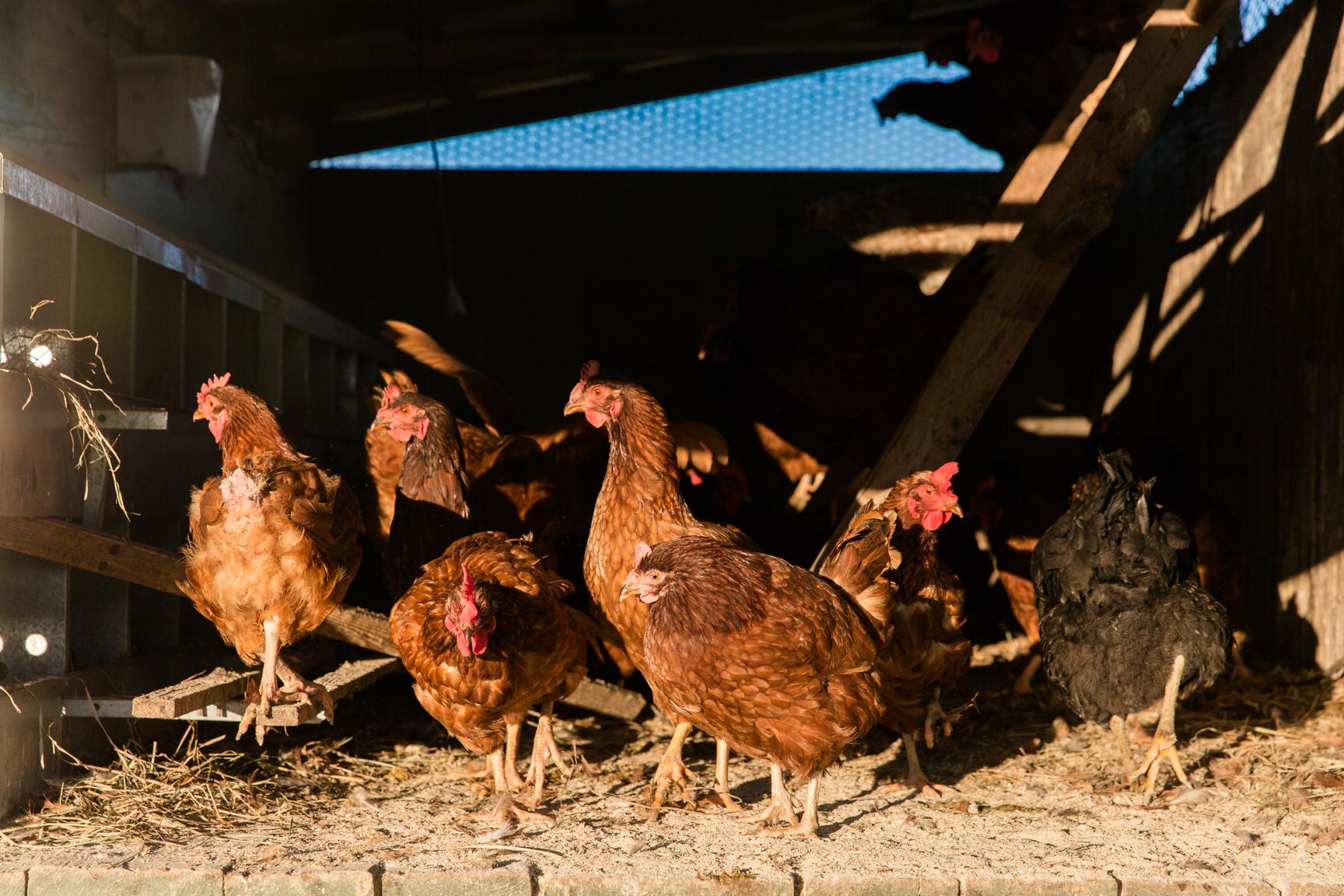Glynwood Eva Deitch Photography Livestock-4.jpg