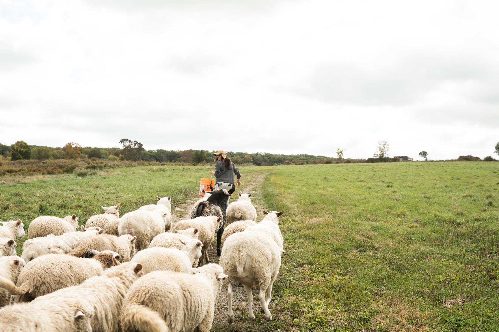 Glynwood Eva Deitch Photography Livestock-29.jpg