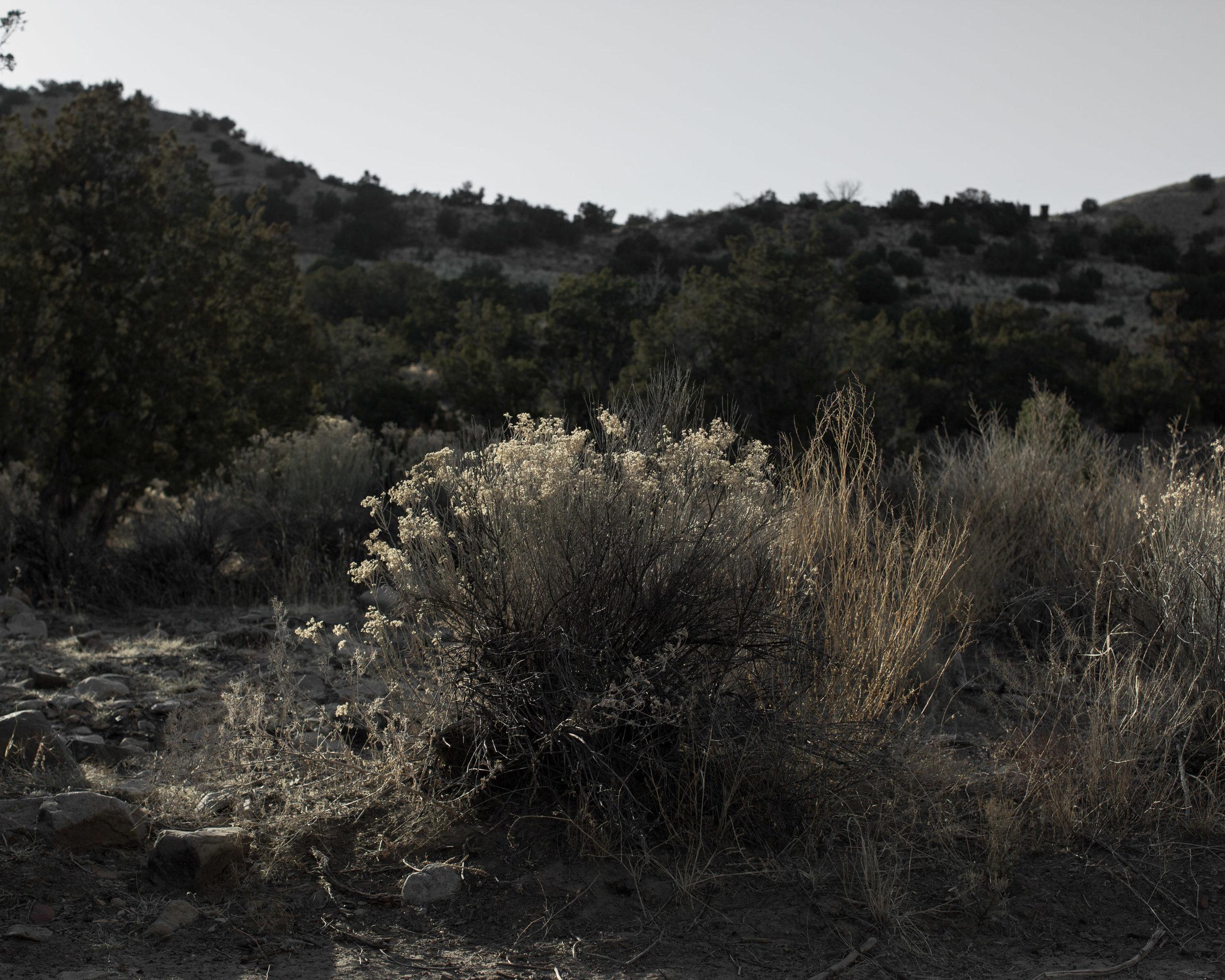 And The Desert Called - Eva Deitch (http://evadeitch.com)