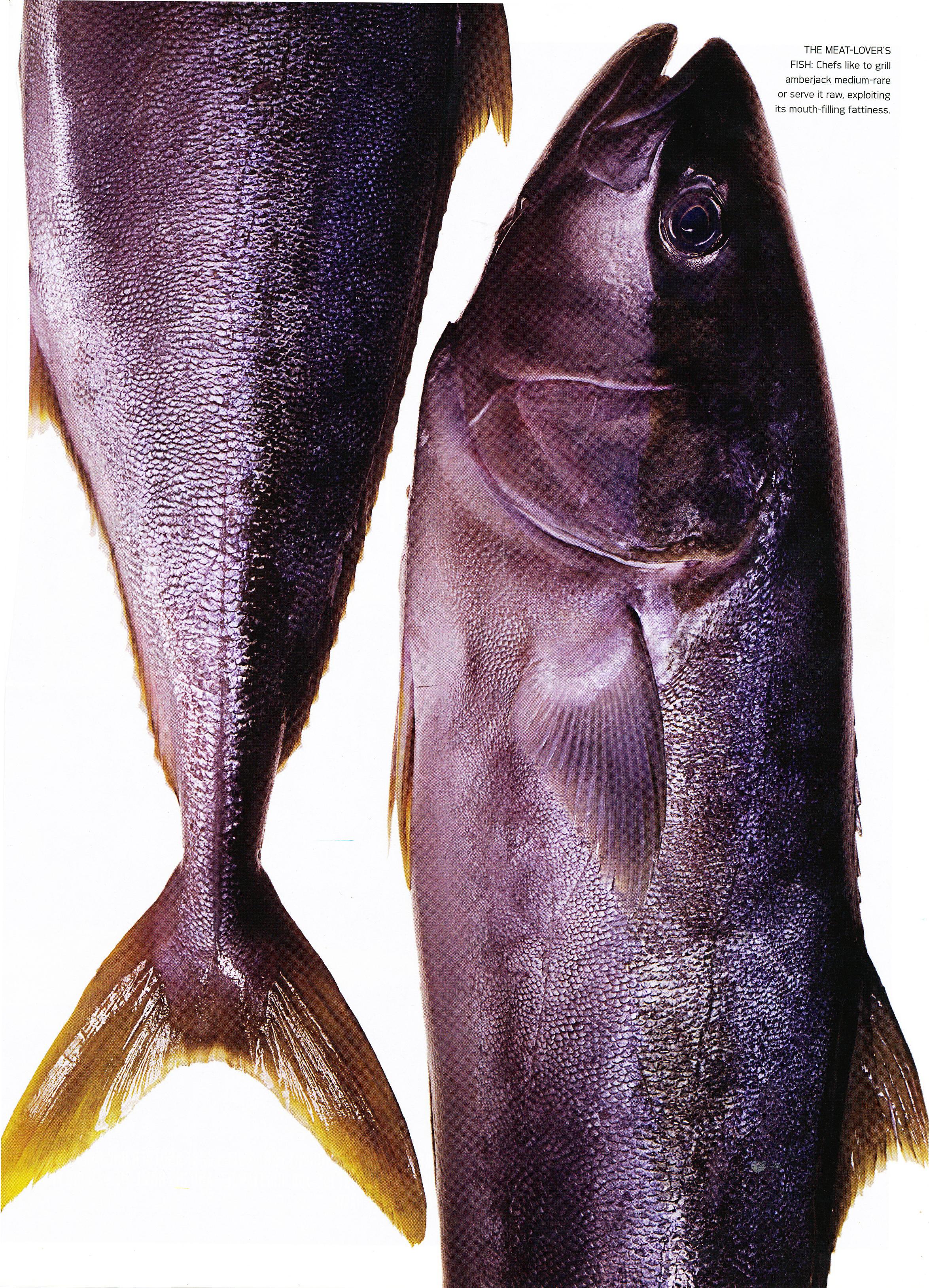10CGFish4.jpg