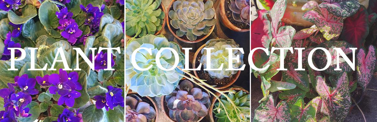 PLANTS banner.jpg