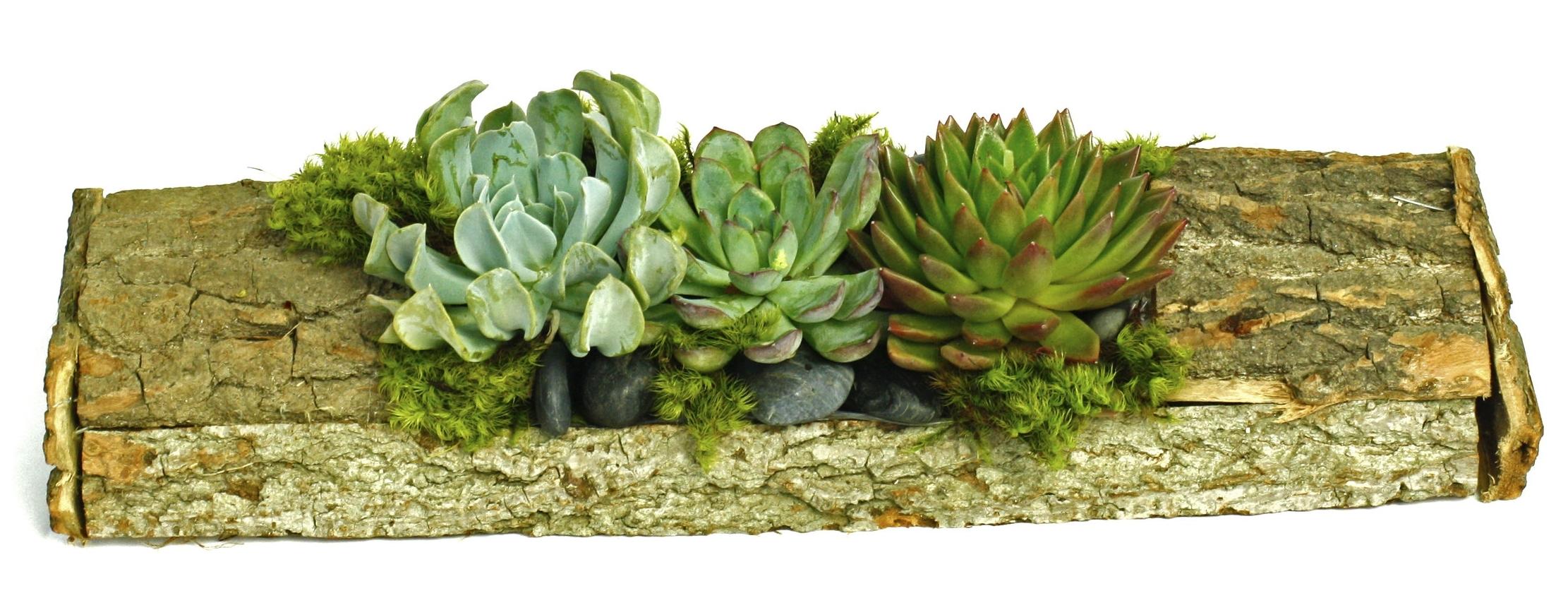 Succulent Woodland $50-$100 -