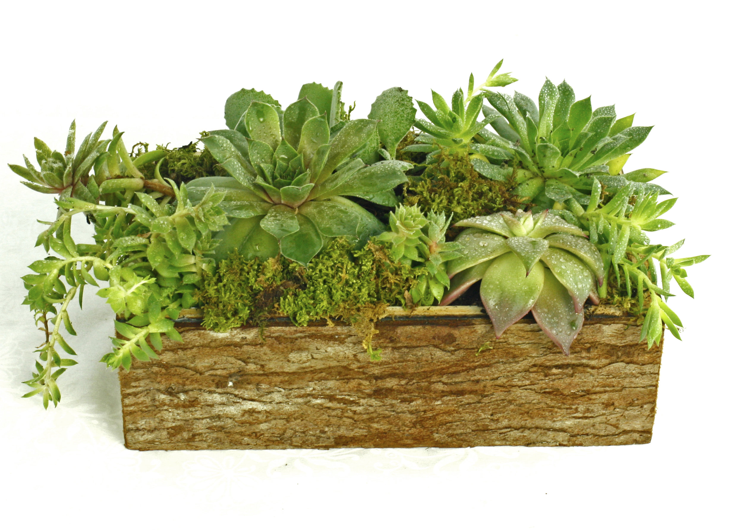 Succulent window box $50-$100 -