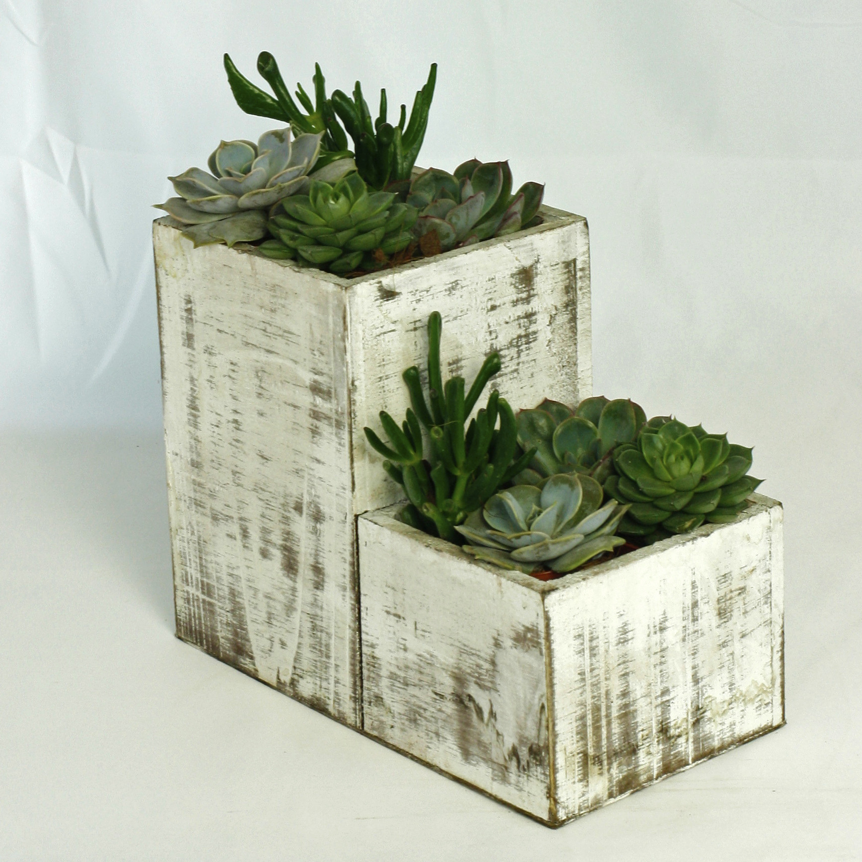 Succulent towers $65 -
