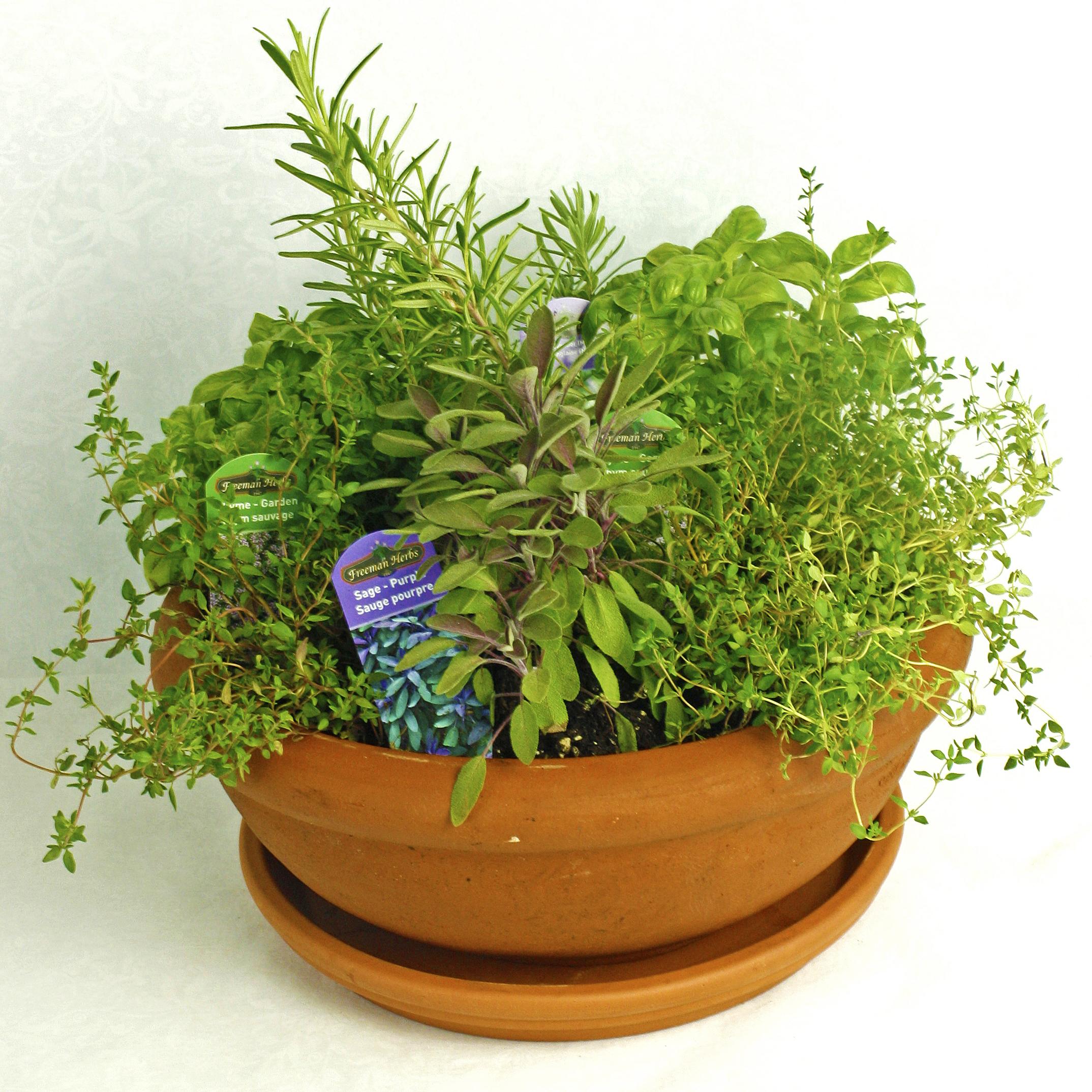 Herb Garden $50-$100 -