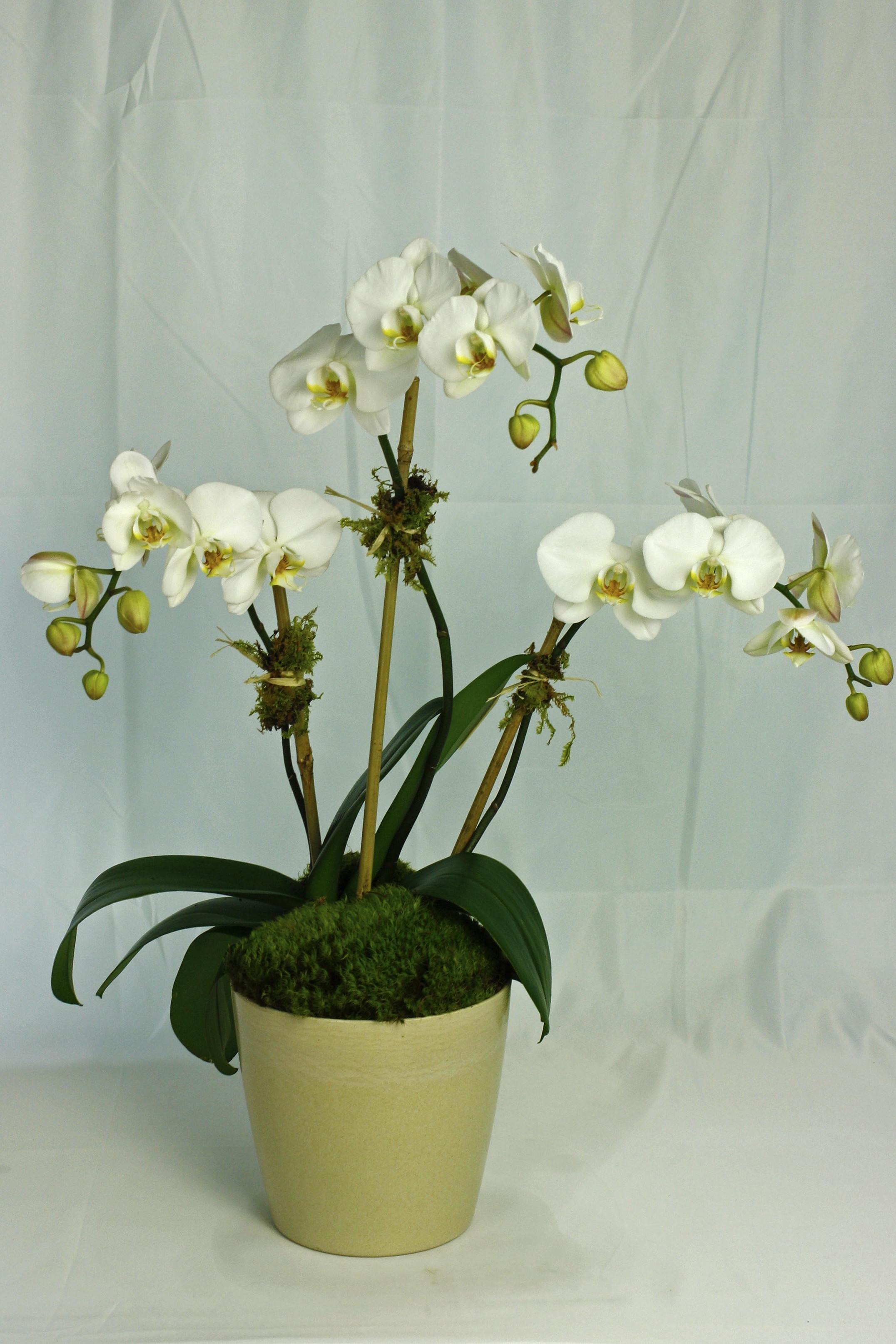 Grand Orchid Garden $100 -